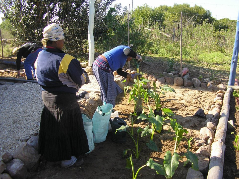 f4t-veggie-garden